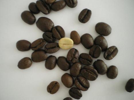 kaffee anzucht und pflegeanleitungen exotischer pflanzen vermehrung wachsen z chten. Black Bedroom Furniture Sets. Home Design Ideas